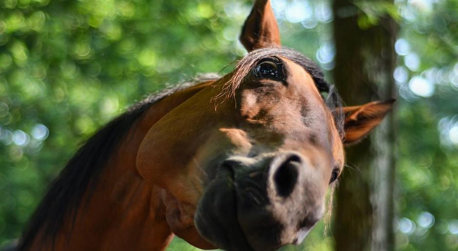 Senat: ustawa dot. organizacji hodowli zwierząt wraca do Sejmu