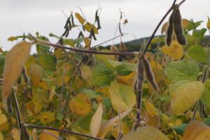 Ohio: Jak chronić glebę i zwiększyć rentowność gospodarstwa?