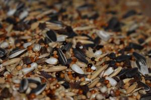 Grawitacyjne mieszanie nasion poplonów