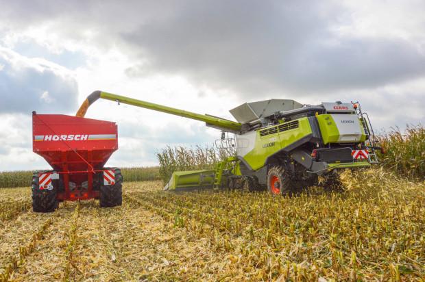Opóźnione zbiory iwysoka wilgotność ziarna kukurydzy