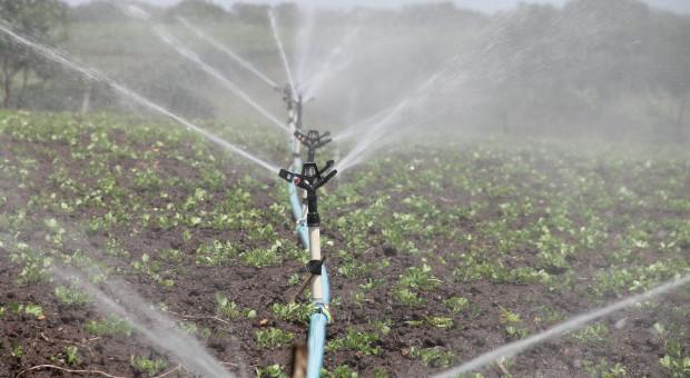 Ruszyły dwa nabory wniosków o wsparcie z PROW: na nawadnianie i rozwój usług rolniczych
