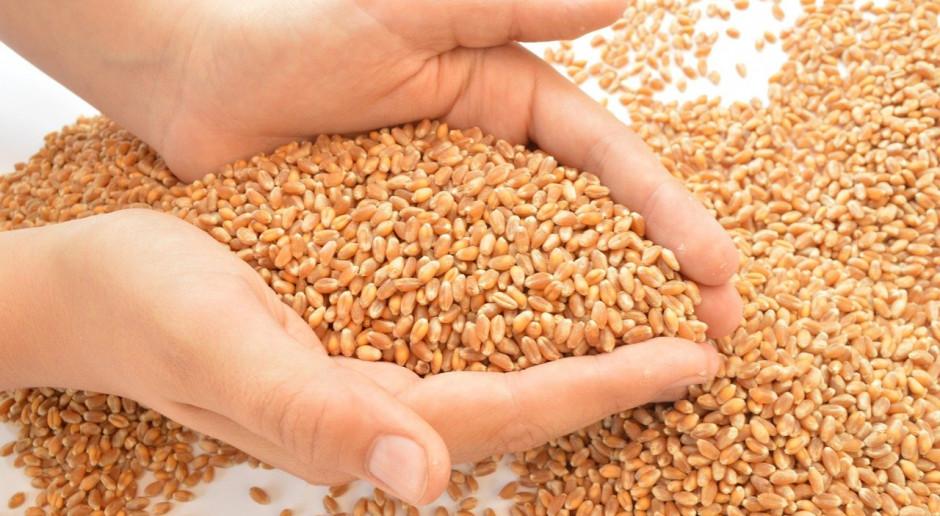 Rosja: Zbiory pszenicy w 2021 roku mogą być znacznie niższe