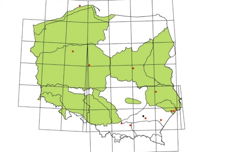 Rozmieszczenie stwierdzeń szarańczy wędrownej Locusta migratora w Polsce w latach 2001-2017 (kropki), na tle regionów gdzie gatunek ten był wcześniej odnotowany do roku 1967 (na zielono). Kropka czarna - stanowisko wcześniej publikowane. Źródło: Przegląd Przyrodniczy XXX, 1 (2019): 66-76