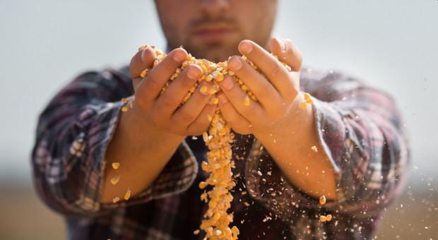 Na giełdach spadki cen zbóż. W polskich skupach cena wysoka