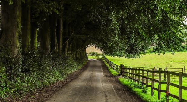 Brexit: Dochody brytyjskich rolników dramatycznie spadną