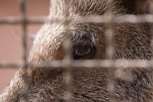 Niemcy: Nie tylko ogrodzenia przeciw ASF