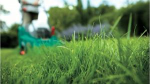 Kosiarki nowej generacji zapewniają wysoką jakość koszenia trawy dzięki  koordynacji pracy silnika i noży. Zbierają one skutecznie do 99% ścinków trawy. Rezultat to zadbany trawnik z równomiernie przyciętą trawą, fot. Bosch