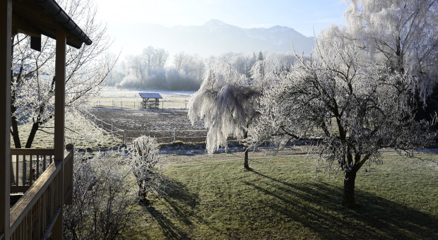 Jak przygotować ogród do sezonu zimowego?