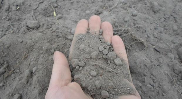 5 grudnia Światowy Dzień Gleby – co wiemy o glebie?