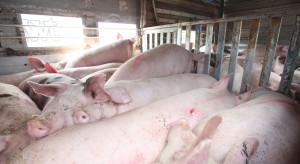 MRiRW: Od 1 listopada zmiany dla rolników chcących transportować świnie