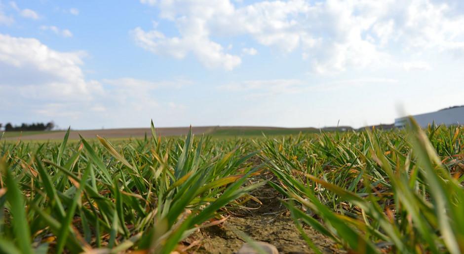 Jakie produkty do jesiennej ochrony upraw?