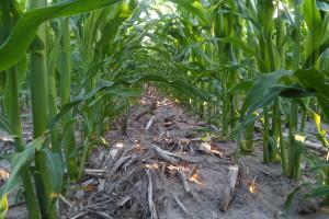 Rolnictwo regeneratywne na świecie: Iowa