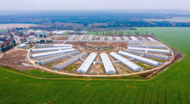 Gobarto uruchamia fermę zarodową dla ponad 6 tys. loch