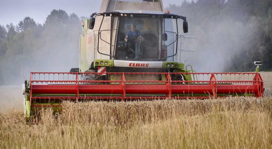 Górka cenowa zbóż się skończyła? Zaczęły się spadki