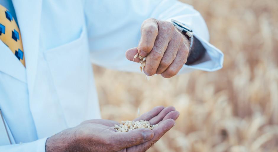 50 lat temu Borlaug otrzymał Nobla za zieloną rewolucję w rolnictwie