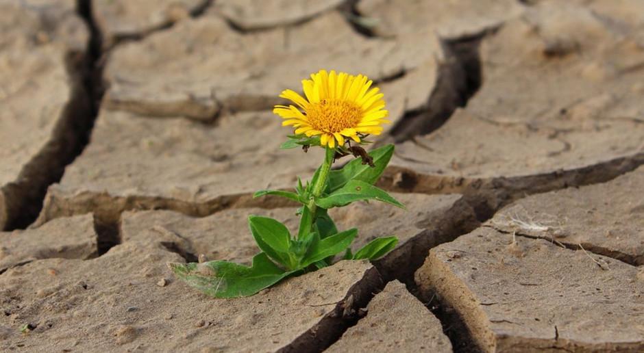 Oddzielne liczenie strat dla produkcji roślinnej i zwierzęcej jest możliwe