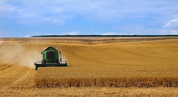 Na Platformie Żywnościowej też obniżka notowań pszenicy