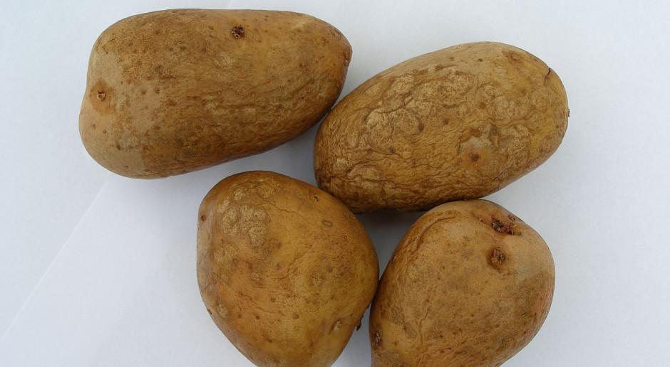 Skontroluj bulwy ziemniaka w przechowalni