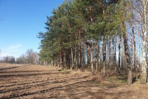 5 powodów, by rolnicy zaczęli sadzić drzewa