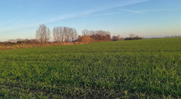 Francja: Większe zasiewy roślin ozimych