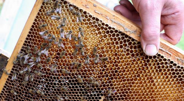 Gmina musi zapłacić odszkodowania pszczelarzom