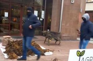 Obornik i dzik przed Podlaskim Urzędem Wojewódzkim, Fot. Uczestnicy protestu