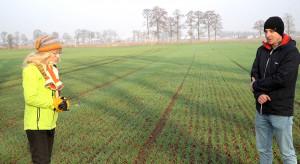 Dobry stan zbóż ozimych w Wielkopolsce