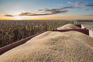Zmniejszył się import soi z USA do UE