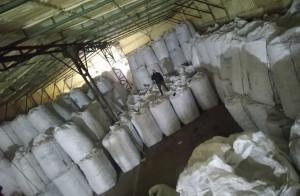 Rolnik spod Łęczycy ma w magazynie 1,5 tys. ton krzywych buraków, Foto: MM
