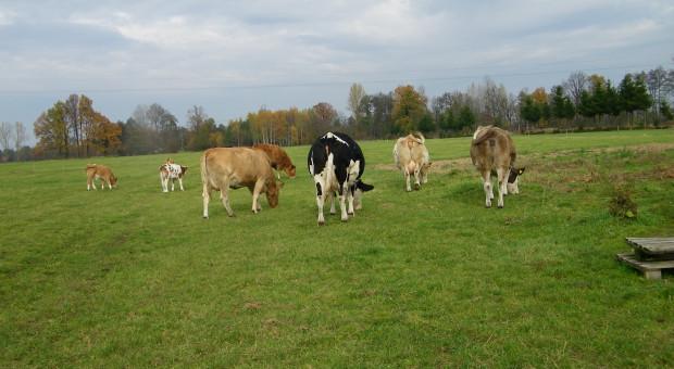 Jak przyczynić się do poprawy stanu gleb, nie będąc rolnikiem