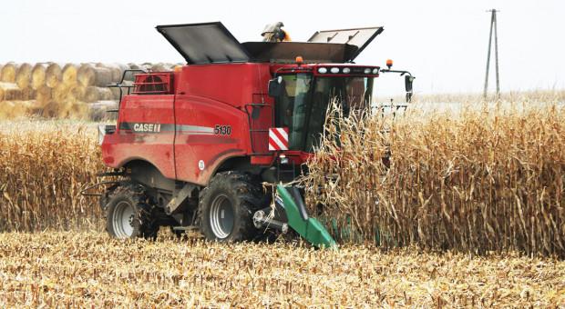 Stworzony (nie tylko) do kukurydzy