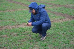 Jaki stan zbóż w województwie lubelskim?