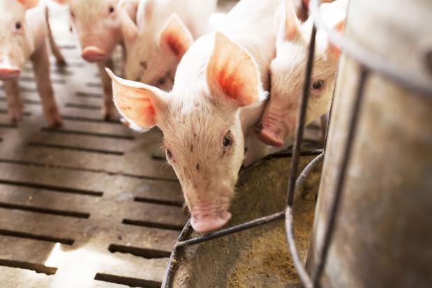 Wielki powrót białka zwierzęcego?