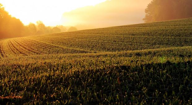 Płatność dodatkowa do pierwszych ha tylko dla gospodarstw nie większych jak 50 ha