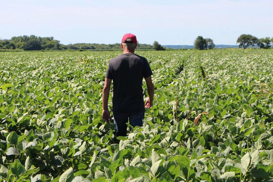 Rolnicy bezorkowi są szczęśliwsi od konwencjonalnych!