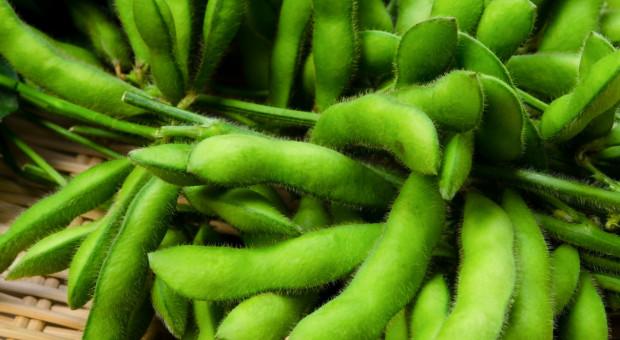 Brazylia: Soja staje się coraz droższa