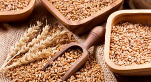Czy będą problemy z podażą zbóż przed żniwami 2021 r.?