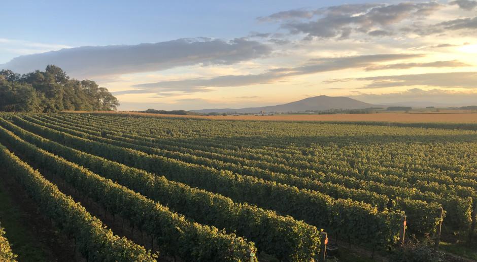 Z Kalifornii na Dolny Śląsk - polskie wina Adoria Cz.1