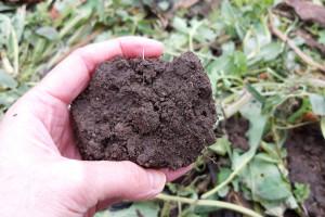 3 proste testy, żeby sprawdzić stan gleby