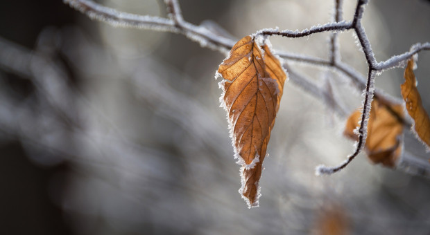 Prognoza pogody na 29 i 30 grudnia