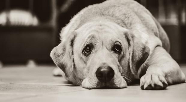 Lubelskie: Kara więzienia za rozjechanie psa samochodem