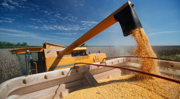 Ukraina: Uzgodniono limit eksportu kukurydzy w sezonie  2020/2021