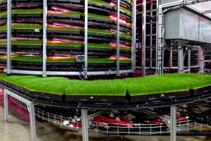 Farma wieżowa, fot. Grōv Technologies
