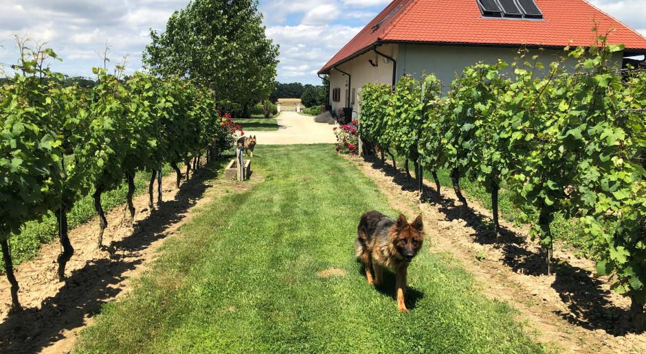 Z Kalifornii na Dolny Śląsk - polskie wina Adoria Cz.3