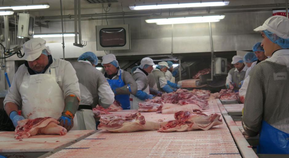 Jakie są zasady wyznaczania zakładów ubijających świnie z niebieskich stref ASF