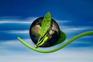 Rząd RP: Nie ma źródeł finansowania unijnej strategii bioróżnorodności