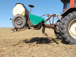 Rzepak jest także wysiewany wtechnologii pasowej, za wysiew nasion odpowiada zmodernizowany siewnik Poznaniak. Jego redlice zostały wyposażone wkółko kopiujące isprężynę zwiększającą docisk