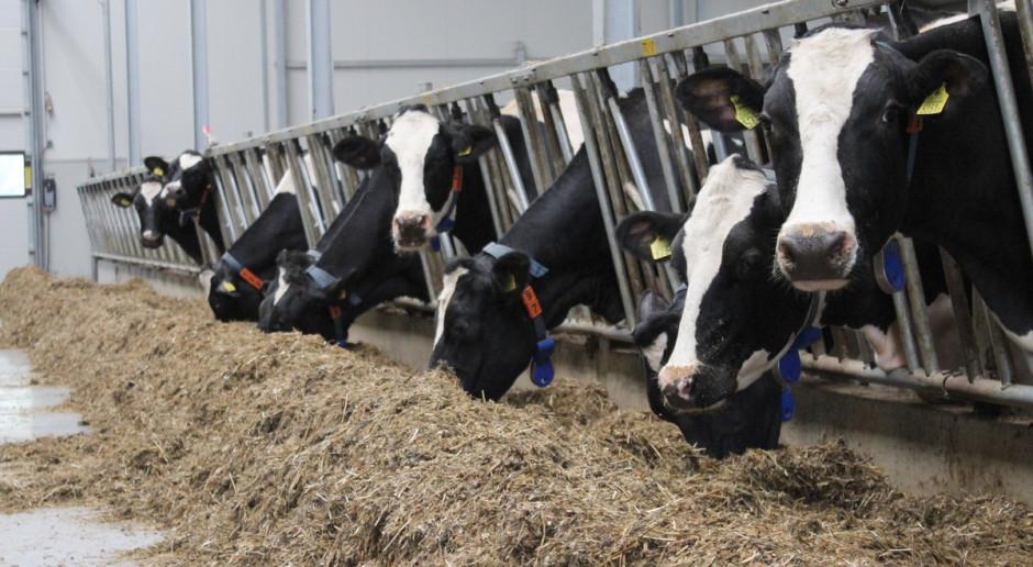 Substancje humusowe a wydajność bydła