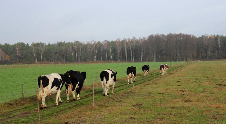 Chcą karać rolników za przepędzanie bydła