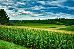 USA: Ceny gruntów ornych wzrosły najwięcej od 6 lat